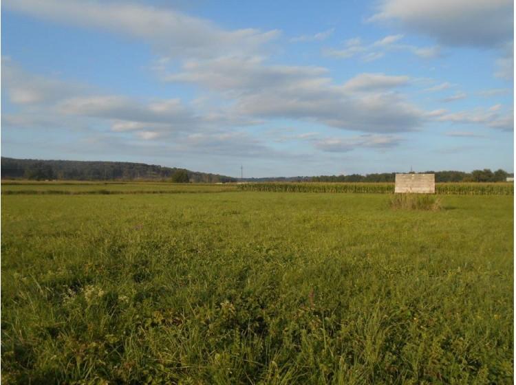 Objektfoto: Fürstenfeld - ebenes Baugrundstück in ruhiger Siedlungslage